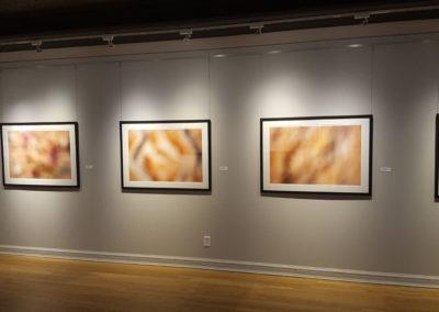 Finch Gallery